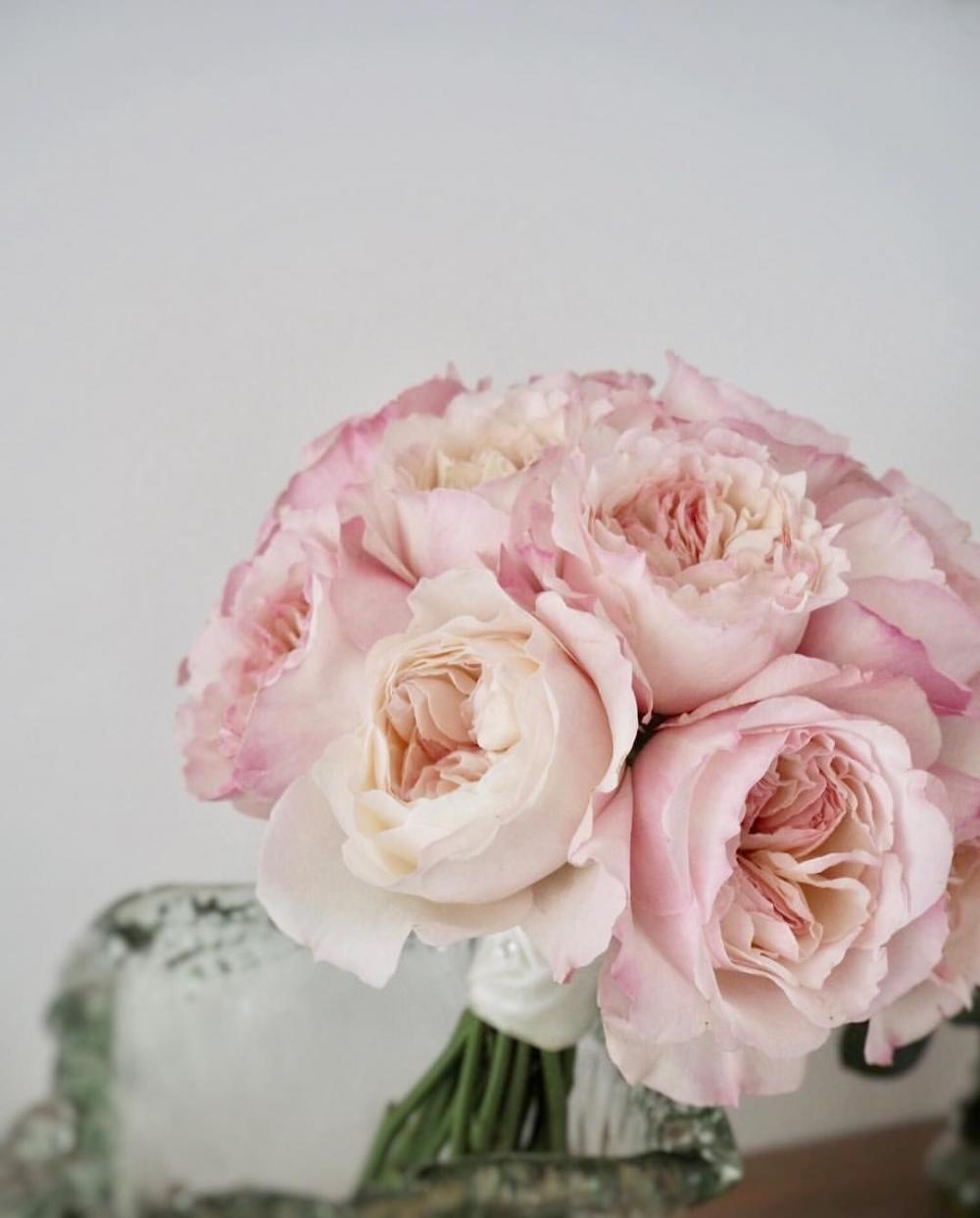 diem danh top 5 hoa hong ngoai vua de trong vua dep  ĐIỂM DANH TOP 5 HOA HỒNG NGOẠI VỪA DỄ TRỒNG VỪA ĐẸP 25fa92db5deedf8ad34323a611ff9990