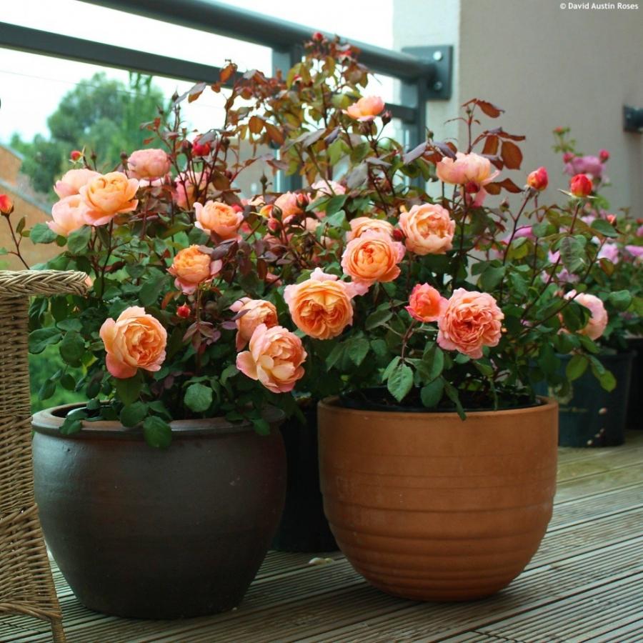 nhung mau hoa hong 8 3 dep nhat danh tang nguoi phu nu minh yeu
