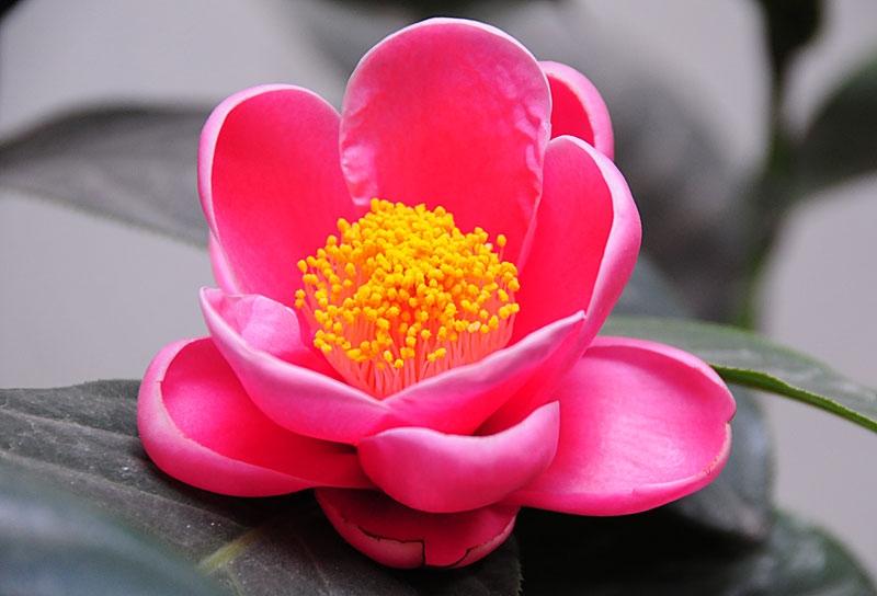 dau la y nghia hoa hai duong trong cuoc song