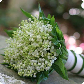 giai dap mot nghin cau hoi xoay quanh y nghia hoa linh lan
