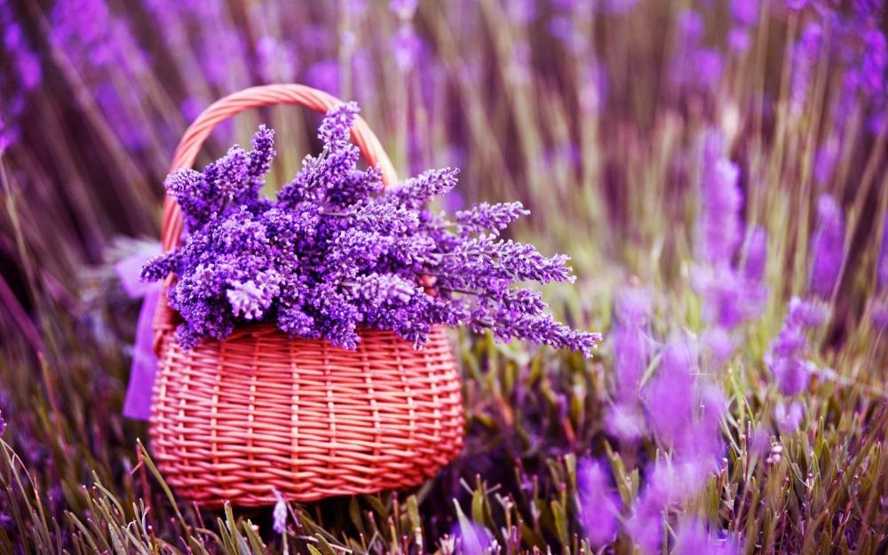 giai ma y nghia hoa oai huong trong tinh yeu