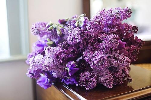 hoa tuoi lavender cho cuoc song them tuoi dep