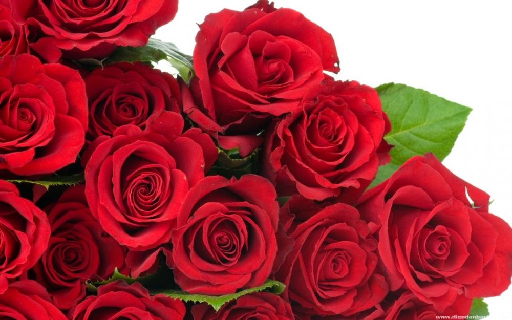 y nghia 19 hoa hong noi len dieu gi