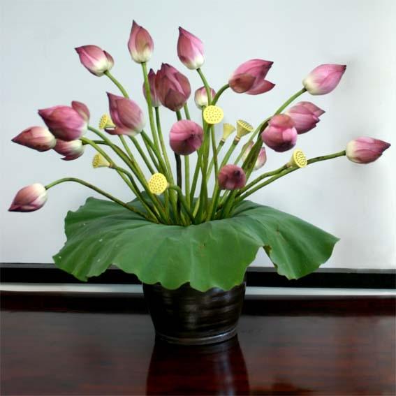 meo chon hoa sen va giu hoa tuoi lau no dep trang tri nha