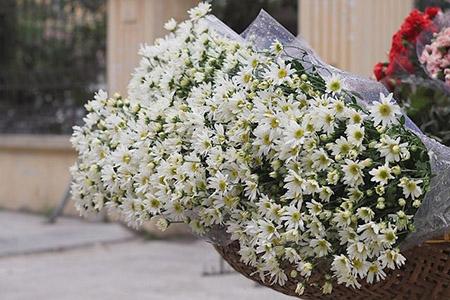 y nghia tuyet voi tu nhung bo hoa cuc hoa mi dep tinh te