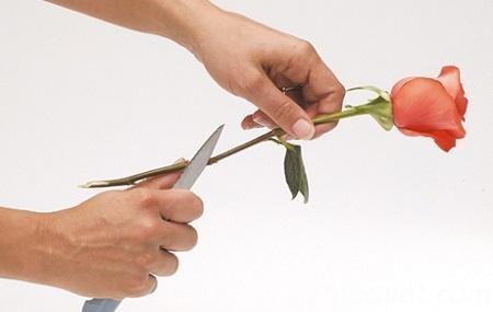 mach ban tuyet chieu chon hoa va giu hoa tuoi lau