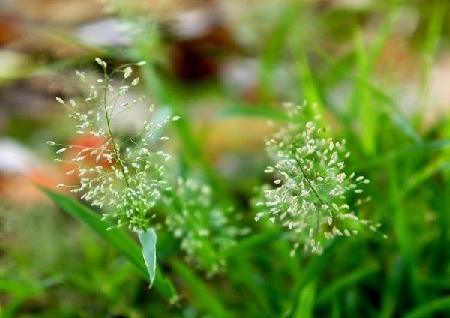 y nghia cua hoa co may