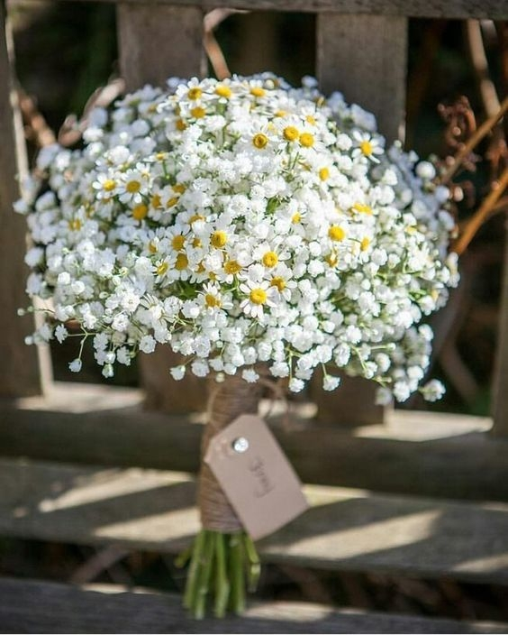 Hoa cưới cúc họa mi ngọt ngào đón Đông về