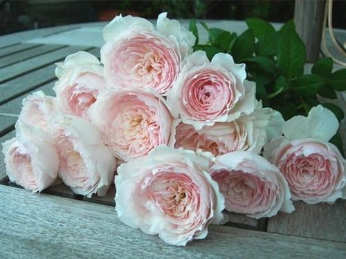 chiem nguong ve dep hoa hong nhat khien bao nguoi me man