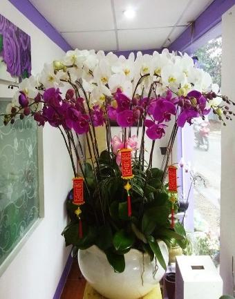 99  hoa sinh nhat dep tang ban trai ban gai nguoi than yeu nhat