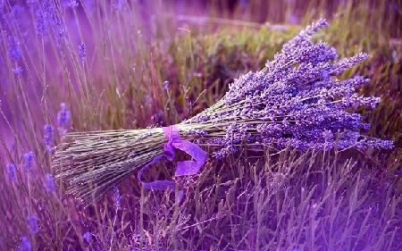 an tuong va y nghia voi hoa cuoi lavender