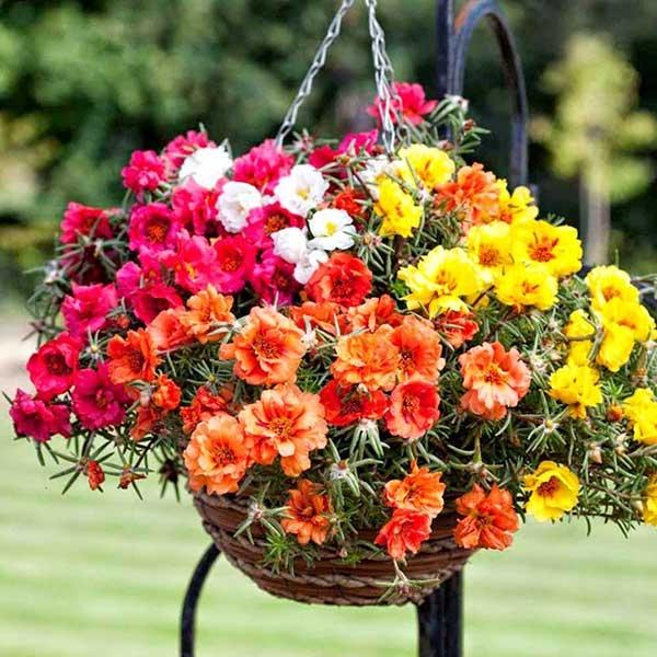 huong dan lai tao mau hoa muoi gio tuyet dep