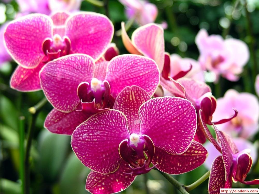 Hoa lan - Ý nghĩa các loài hoa lan