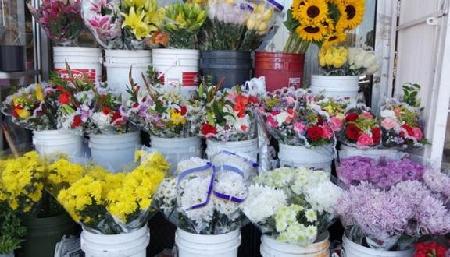 top 4 shop hoa tuoi tai nha trang khanh hoa dep nhat