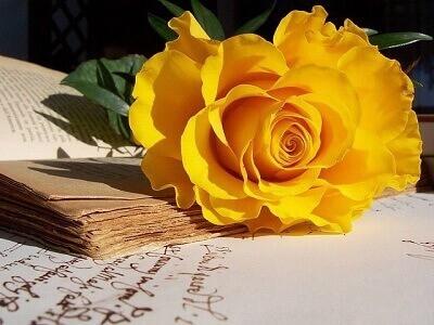 kinh nghiem cham soc hoa hong bi vang la hieu qua nhat  KINH NGHIỆM CHĂM SÓC HOA HỒNG BỊ VÀNG LÁ HIỆU QUẢ NHẤT hoahongvang