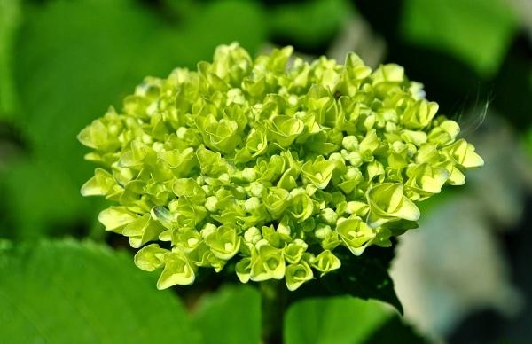 meo tang hoa qua sinh nhat cho quy co menh moc