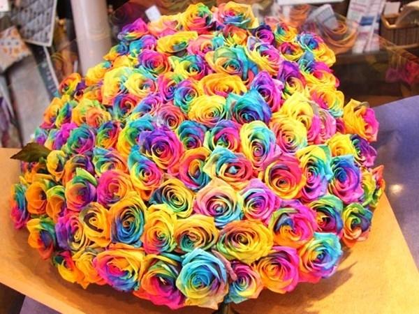 hoa hong 7 mau