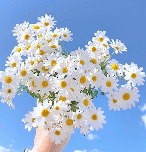 nhung status ve hoa va tinh yeu hay y nghia