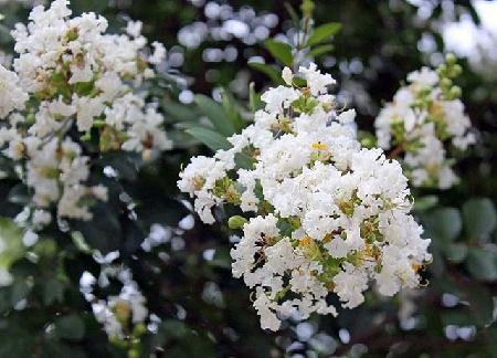 y nghia hoa tuong vi trong tinh yeu va cuoc song